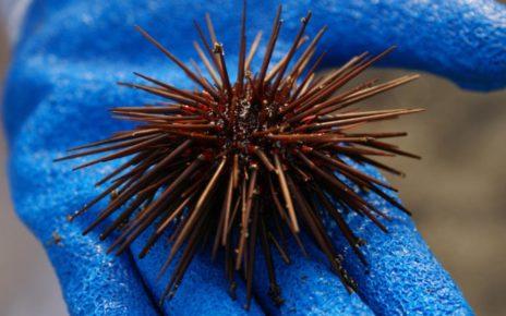 Hati-Hati Bila Melihat Penampakan 5 Hewan Laut Ini di Pantai