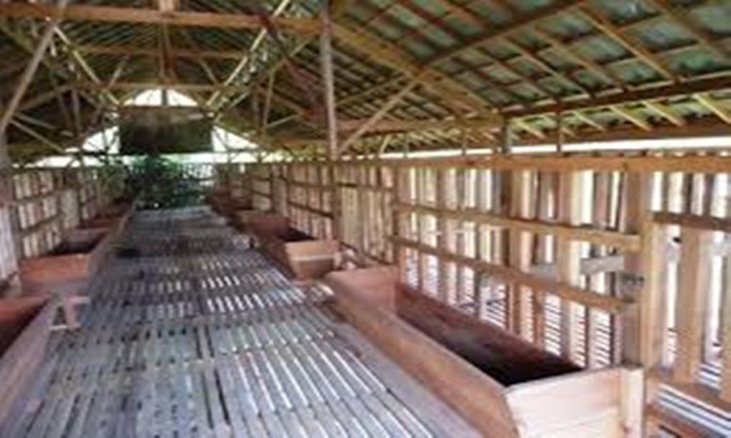 Cara Membuat Kandang Ayam Petelur Sederhana dari Bambu