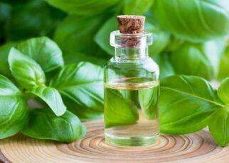 Manfaat Minyak Daun Basil untuk Kesehatan Tubuh